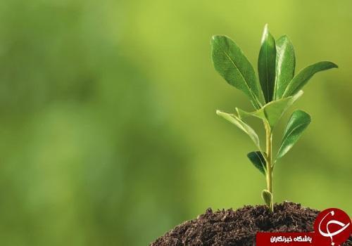 معرفی و بررسی رشته گیاه پزشکی