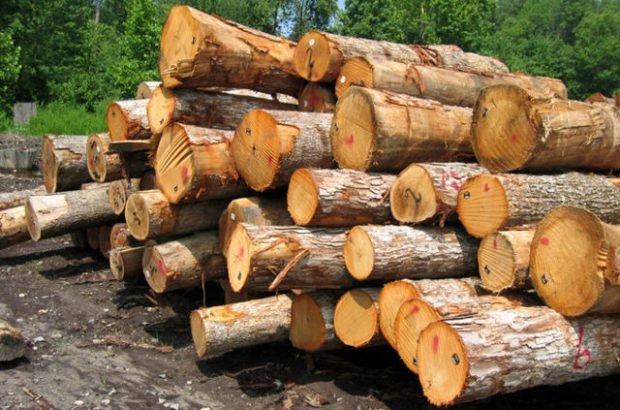 حمل چوب و زغال بدون مجوز منابع طبیعی ممنوع است