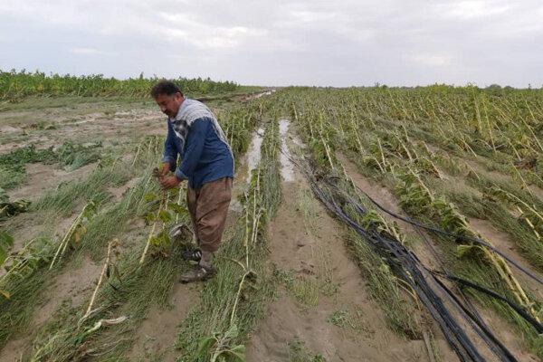 خسارت 220 میلیاردی سیلاب به کشاورزی میناب