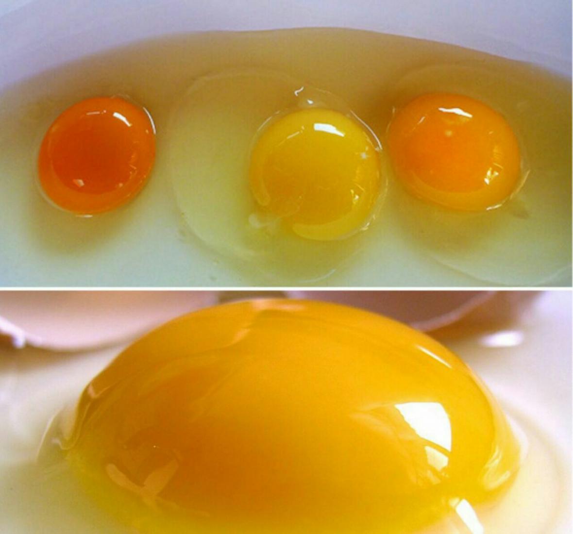 زرده تخم مرغ باید چه رنگی باشد؟