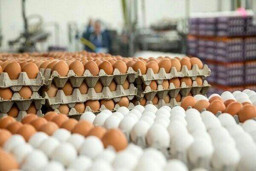 اعلام قیمت جدید تخم مرغ در بازار